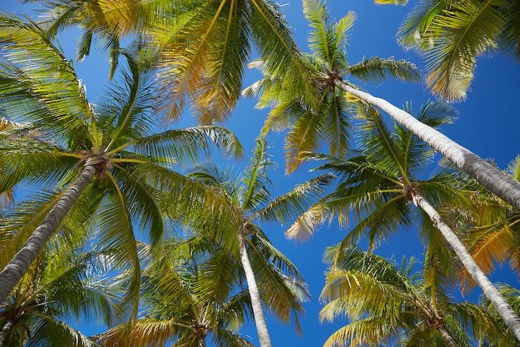 5 bonnes raisons de se rendre en Guadeloupe